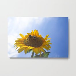 Sun flower reaching for the sy - Nature photography  Metal Print