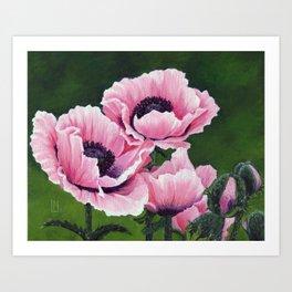 Pretty Pink Poppies Kunstdrucke