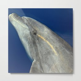 Making friends with a bottlenose dolphin Metal Print