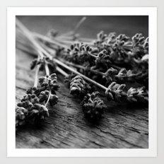 Lavender No. 2 (Black & White) Art Print