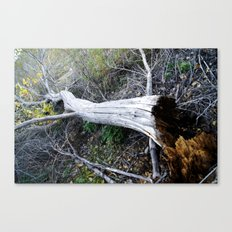 The Rot From Within Canvas Print
