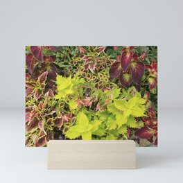 Foliage Fiesta With A Touch Of Begonia Mini Art Print