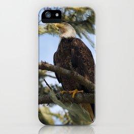 Bald eagle at La Push iPhone Case