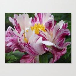 Peony - Raspberry Swirl Canvas Print
