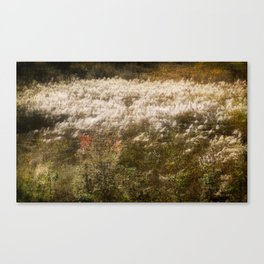 Wind and  gramineae Canvas Print