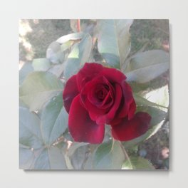 Red Bordo Rose Bloom Metal Print