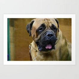 Bull Mastiff Art Print