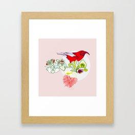 Red Ohia Lehua and Iwi Bird Framed Art Print