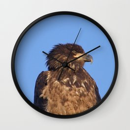 Golden Eagle on the Kenai Wall Clock