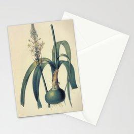ornithogalum longibracteatu Redoute Roses m Stationery Cards