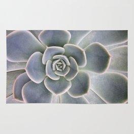 Succulent Leaf Close Up Photography | Plant | Cactus | Botanical Rug