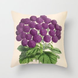 Double Cineraria Original hand-coloured print drawn and lithographed by Fitch Throw Pillow
