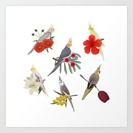 Cockatiels Galore Art Print