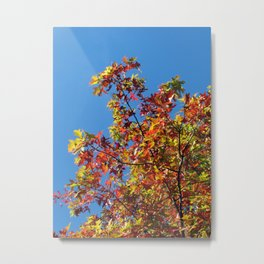 plane tree Metal Print