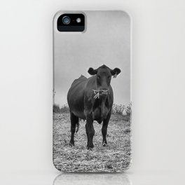 Cows at Point Reyes National Seashore iPhone Case