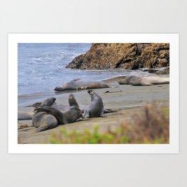 Elephant Seals Art Print