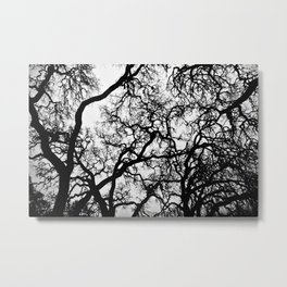 BlackTree Metal Print