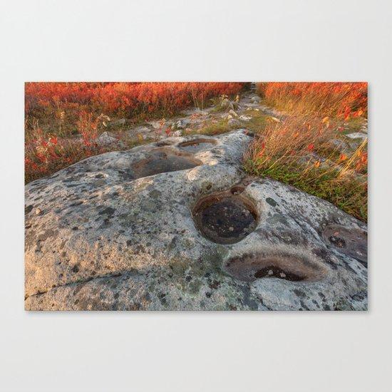 Autumn Huckleberry Fossil Canvas Print