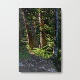 Trail, Fairy Lake, Gallatin County, MT Metal Print