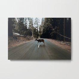 Deer Crossing / Yosemite, California Metal Print