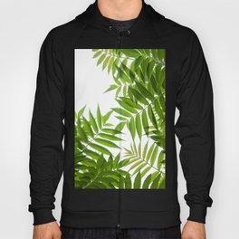 Embrace of a Rowan Tree Hoody