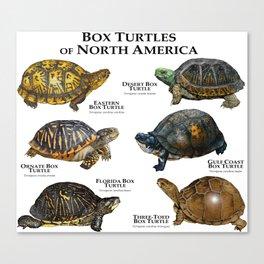Box Turtles of North America Canvas Print
