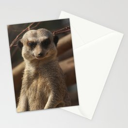 Meercat Donegal Stationery Cards