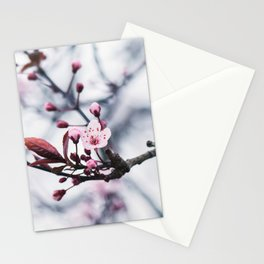 Beautiful Cherry Blossom - Hill Cherry Stationery Cards