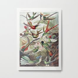 Hummingbirds illustration by Ernst Haeckel. Metal Print