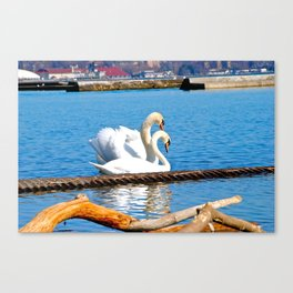 Birds love Canvas Print