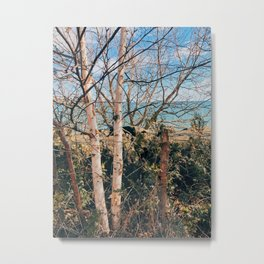 Sunny winter day Metal Print