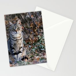 The half cat Stationery Cards