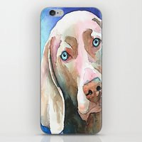 greg guillemin iPhone & iPod Skins featuring Greg The Weimaraner by bmeow
