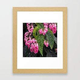 ANGEL WING PINK  BEGONIA FLOWERS Framed Art Print