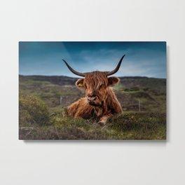 Beef Nature Metal Print