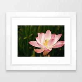 Radiant Lotus Framed Art Print