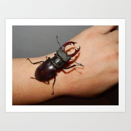 Large beetle stag beetle insects Art Print