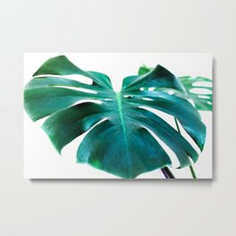 Monstera close up tropical leaf green turquoise photograhy Metal Print