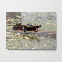 Swampy home Metal Print
