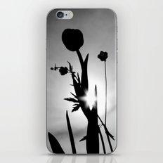 Tulips in the sun iPhone & iPod Skin