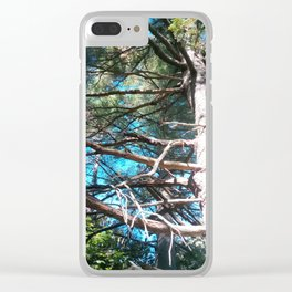 Whit Pine Clear iPhone Case