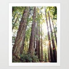 Sunlight Through Redwoods Art Print