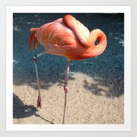 Flamingo Zen Art Print