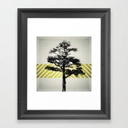 Ulmus parvifolia (Defying the Odds) Framed Art Print