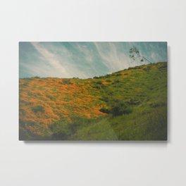 California Poppies 017 Metal Print