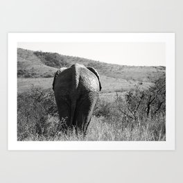 Elephant in Africa Art Print