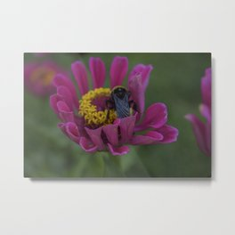 Bee Boi Metal Print