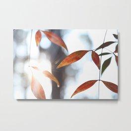 Orange Leaves in the Sunlight Metal Print
