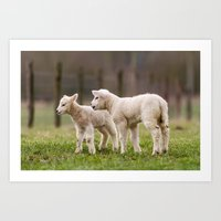 lamb Art Prints featuring lamb by Marcel Derweduwen