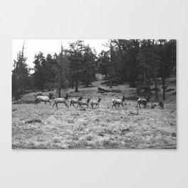 Colorado, wildlife Canvas Print